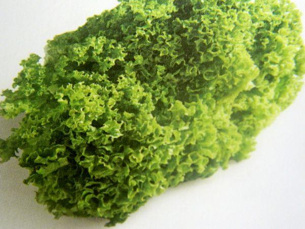 Sałaty - najpopularniejsze odmiany i ich zastosowanie w kuchni